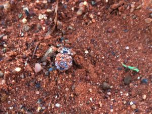 Mouldy Beetle at SUNSET Private Reserve 2