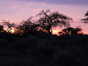 Purple Sunrise at SUNSET Private Reserve